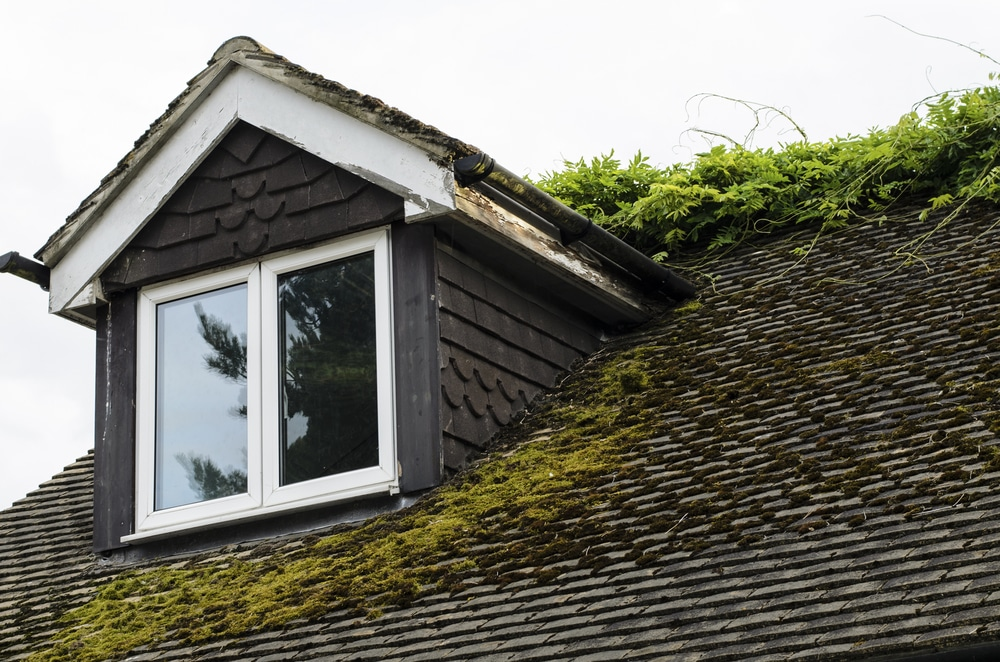 what causes dirty roof